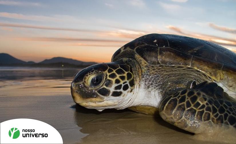 23 de Maio – Dia Mundial da Tartaruga. Conscientize-se!