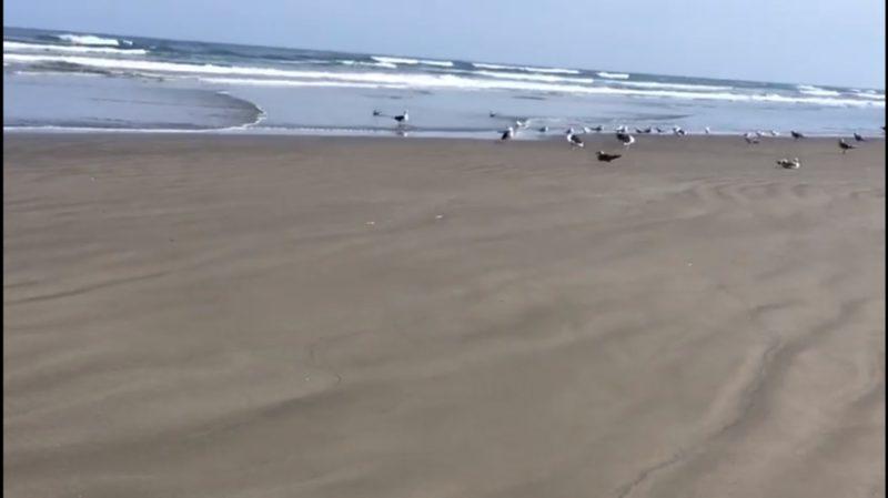 Água cristalina e pássaros: Praia Grande vê paisagem mudar com isolamento